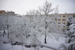 冬天在有用雪报道的树枝的城市公园 免版税库存照片