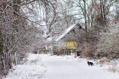 冬天在村庄 免版税图库摄影