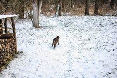 冬天在村庄 免版税库存照片
