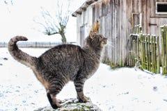 冬天在村庄 库存照片
