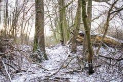 冬天在村庄 图库摄影