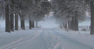 冬天在树之间的村庄路 股票视频