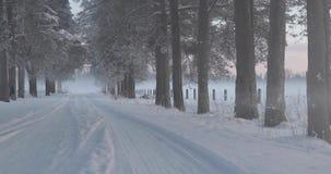 冬天在树之间的村庄路 股票录像
