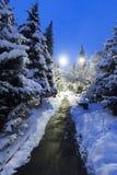 冬天在树圣诞树的公园雪丛生积雪的路 库存图片