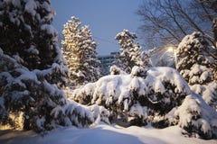 冬天在树圣诞树的公园雪丛生积雪的路 库存照片