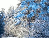 冬天在树的森林雪 33c 1月横向俄国温度ural冬天 免版税库存图片