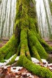 冬天在森林托斯卡纳里 免版税图库摄影