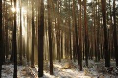 冬天在森林里。 库存图片