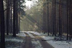 冬天在森林里。 库存照片