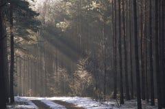 冬天在森林里。 免版税库存照片