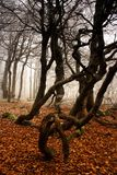 冬天在森林里开始 免版税库存照片