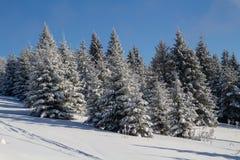 冬天在森林里 库存图片