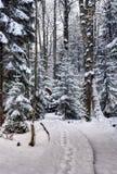 冬天在森林里 免版税库存图片