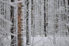 冬天在森林里 库存照片