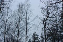 冬天在森林里 免版税库存照片