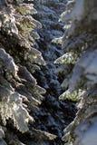 冬天在森林里 免版税图库摄影