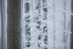 冬天在森林,与霜的树里 在捷克山毛榉树的雪细节pf森林蓝色和白色冬天风景 与霜外套的木头 免版税库存图片
