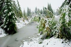 冬天在森林 库存照片