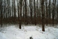 冬天在森林 免版税库存图片