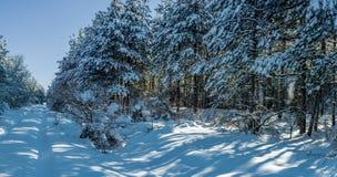 冬天在森林04 库存照片