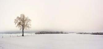 冬天在欧洲 库存图片