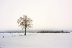 冬天在欧洲 免版税库存照片