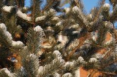 冬天在沃洛格达州 免版税库存照片