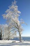 冬天在湖的施塔恩贝格,德国图钦格 免版税图库摄影