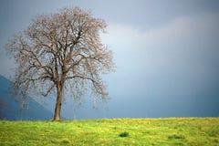 冬天在灰色天空的苹果树 免版税库存照片