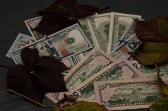 冬天在秋天样式离开与美元 免版税库存图片