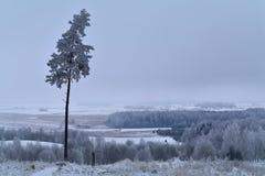 冬天在立陶宛 在视图之上 图库摄影