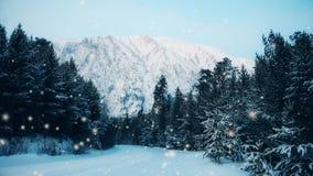 冬天在降雪的森林风景 影视素材