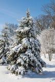 冬天在雪包括的林木 免版税库存图片
