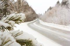 冬天在雪寒冷和霜的弯曲道路,在前景在雪的一个杉木分支 免版税库存照片