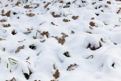 冬天在雪的季节和黄色叶子 免版税库存图片