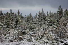 冬天在雪盖的妙境树 免版税图库摄影