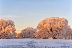 冬天在霜的风景树在桃红色太阳的黎明 库存图片
