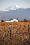 冬天在贝克山附近的莓庄稼 库存照片