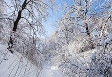 冬天在结构树之下冠的森林公路  库存图片