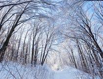 冬天在结构树之下冠的森林公路  库存照片