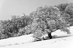 冬天在黑白的山森林里 图库摄影