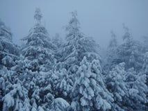 冬天在Beskydy 图库摄影