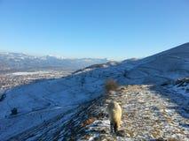 冬天在Viseul de乔斯, Maramures,罗马尼亚 免版税库存图片