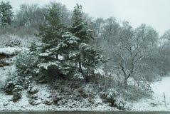 冬天场面在森林里 免版税库存照片