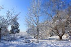 冬天场面在森林里 免版税库存图片
