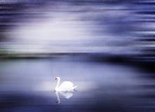 冬天场面平安的概念的美丽的天鹅湖 免版税图库摄影