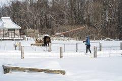 冬天场面横越全国的滑雪者 免版税库存图片