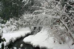 冬天场面,雪在森林里 免版税图库摄影