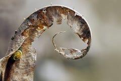 冬天场面:起毛机和小的蜗牛,两个的干燥叶子在spi 图库摄影