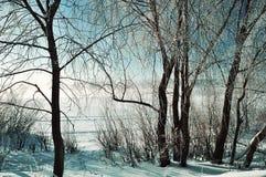 冬天场面-在河附近的冷淡的多雪的树冬天日出的 免版税图库摄影